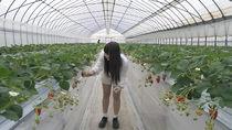 茨城県の農場で「1棟1組完全貸切」のいちご狩りがスタート