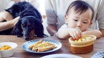 人と犬がシェアして食べられる「米粉のお花見クッキー」が販売中