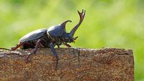 カブトムシの育て方。飼育する前の準備や捕まえる方法、飼育のコツなど