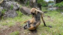 伊豆シャボテン動物公園でさまざまな動物のベビーラッシュが到来