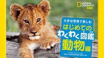 ナショジオキッズから野生動物たちを大迫力の写真で見る新刊が発売