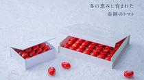 糖度11度の奇跡のミニトマト「OSMIC first WINTER」が期間限定発売