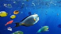 北海道の赤ちゃん連れにおすすめの水族館。ママ目線で選んだ5つをご紹介