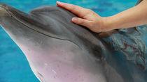 大阪の水族館でふれあい体験。海の生き物に触れたり、餌やりを楽しもう