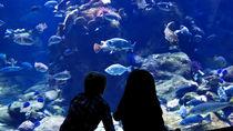 神奈川県の水族館。冬のお出かけを家族で楽しもう