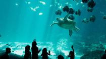 静岡県でお正月も営業している水族館。年末年始も子連れで楽しもう。