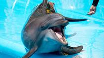 静岡県の水族館の入場料金はいくら?クーポン情報を調べて家族でお得に楽しもう