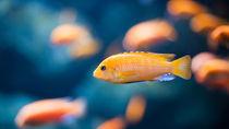 静岡県周辺の冬限定のイベントが楽しめる水族館。海の生き物を家族で見に行こう