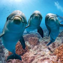 東京の水族館のチケットの値段やクーポン情報を調査。家族で海の生き物に会いに行こう