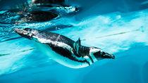 静岡県の水族館。チケットの値段や子連れにおすすめのイベント情報など調査