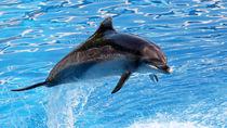 静岡県周辺の水族館のクーポン情報。家族でお得におでかけを楽しもう