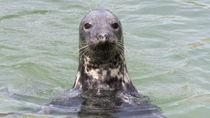 静岡県周辺の水族館でえさやり体験。動物と間近でふれ合おう