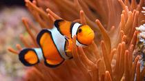 静岡県の水族館。家族でさまざまな種類の海の生き物に会いに行こう