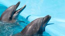静岡県の観光におすすめの水族館。子連れで楽しめるイベントなど