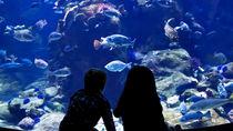 神奈川県周辺の水族館でナイトアクアリウムが楽しめるスポットを紹介