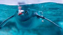 静岡県内の水族館は年始いつから営業している?お正月も子どもと楽しもう