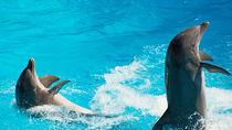 家族みんなで楽しめる大阪周辺でイベントが行われている水族館
