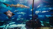 北陸の水族館。正月でも遊べる家族のお出かけにおすすめのスポット