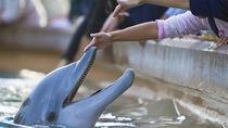 神奈川県周辺にある生き物に触れる体験ができる水族館で子どもと体感しよう