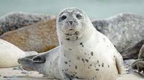 北陸の水族館。入館料金やクーポン情報、家族で楽しめるイベントなど調査