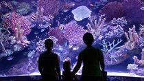 都内のクリスマスシーズンに楽しめる水族館。特別な展示やイベントを楽しもう