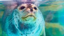 北陸の水族館のチケットの値段やクーポン情報、子連れにおすすめのイベントなど調査