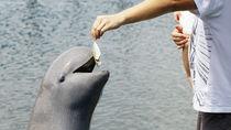 神奈川県のえさやりプログラムが楽しめる水族館