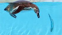 横浜周辺の水族館でえさやりプログラムを楽しもう