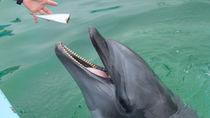 神奈川県周辺の水族館でふれあい体験・餌やりを楽しもう
