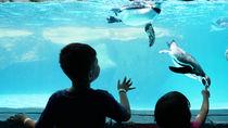 東京の水族館。子連れ観光におすすめのスポット
