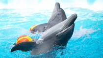 横浜周辺でショーが人気の水族館。ショーにこだわった水族館で海の生き物を体感しよう