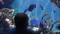 都内周辺で元旦から営業している水族館。寒い冬でも家族で楽しもう