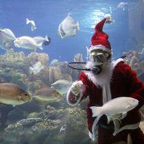 横浜周辺の水族館でクリスマスシーズンならではのイベントを楽しもう
