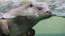 横浜周辺の水族館でさまざまな種類の生き物との出会いを楽しもう