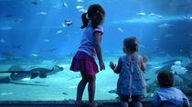 神奈川県周辺の水族館の入館料金や施設情報。家族で海の生き物を見に行こう