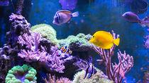 東京都とその周辺でナイトアクアリウムが楽しめる水族館