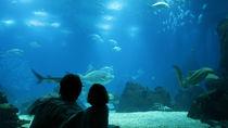大阪周辺の観光スポット付近の水族館へ。子連れのおでかけを楽しもう