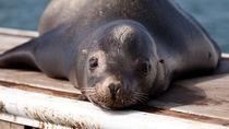 東京の水族館。さまざまな種類の生き物に出会いに家族で出かけよう