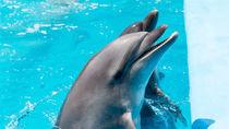 東京の水族館でさまざまな海の動物たちに会いに行こう