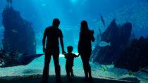 神奈川県の水族館。子連れ観光におすすめのスポット