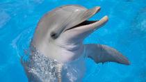 北海道の水族館。さまざまな海の動物たちに会えるスポット