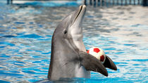 北海道の水族館のイベント。ショーやエサやり体験など、家族で楽しもう