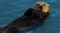 兵庫周辺で正月に営業している水族館はある?営業時間やイベント情報を調査
