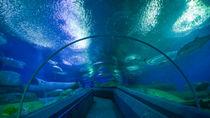大阪周辺の水族館はいつから営業している?年始の開館状況などをご紹介