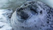 神戸周辺の水族館でふれあい体験。イルカやアザラシなど、海の生き物を体感しよう