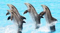 関西の水族館のイベント情報。ショーやふれあいタイムなど、親子で楽しもう