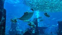 関西の水族館。餌やりプログラムで海の生き物とふれ合おう