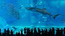 兵庫周辺の水族館へ。さまざまな種類の海の生き物に会いに行こう