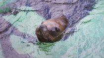 東京のえさやりプログラムがある水族館で子どもの喜ぶ顔を見よう