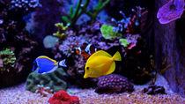 関西の水族館は年始いつから営業している?開館状況やイベントについて調査